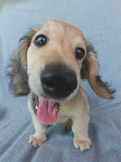 Собачий позитивчик (100 фото)