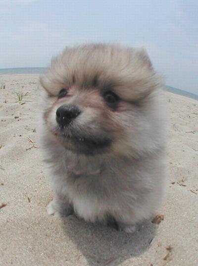 憨态可掬的狗宝宝,太可爱啦-【动物图片】